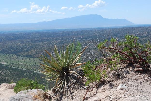 Yucca baccata and Sandia
