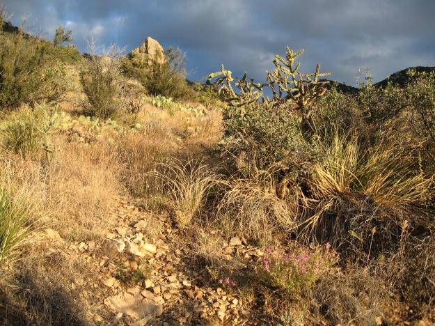 distinct localities & funky vegetation