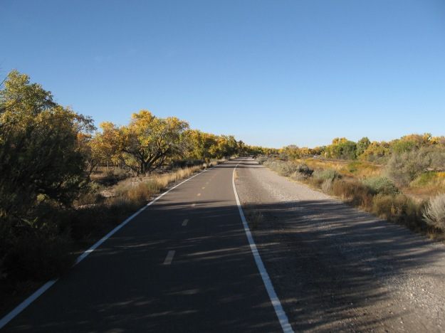 Open trail along the colorful cottonwood groves bending by the river