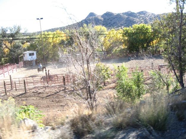 horses in Tijeras Canyon