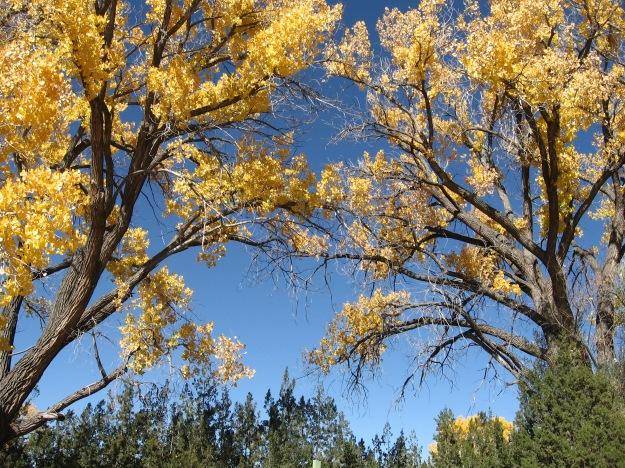 Galisteo Basin trees