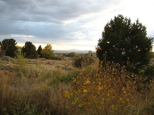 Sunday evening we walked up into the foothills from Embudito Hills Park.  The texture of the land here is remarkable.