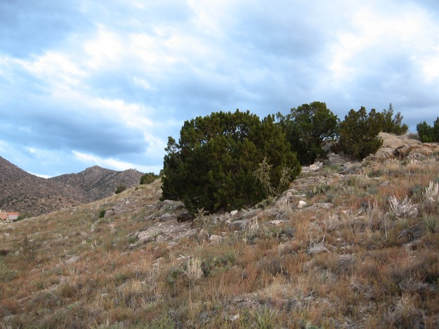 Trees have an enduring presence and parent along many communities of smaller plants.