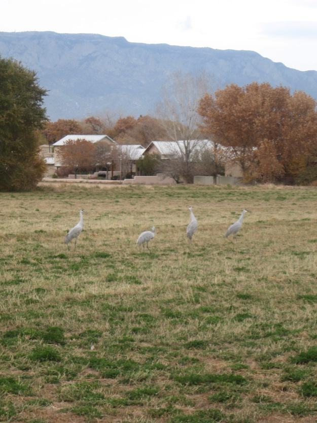 you can walk up close to the Sandhill Crane.  The mixed use lands are balanced between farming, housing, and open space