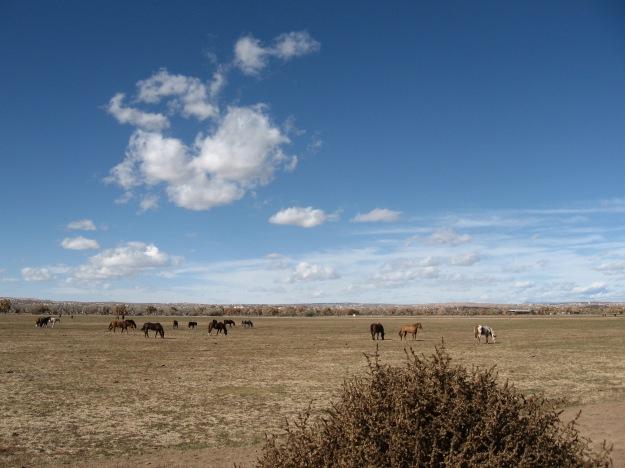 Off the Sandia Pueblo road (aka 313) toward Bernaillo.  I love horses.  Buffalo and horses.