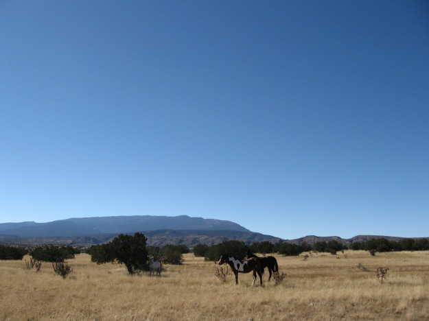 wild horses ranging on the north side of the Sandia