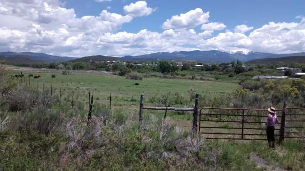 Buffalo at Picuris Pueblo with calves.  What a scene.