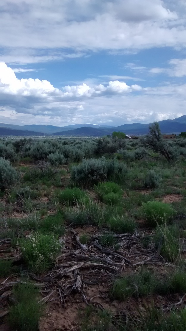 Sagebrush and mountain background Taos