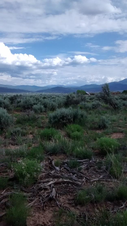 Sagebrush and mountain background Taos