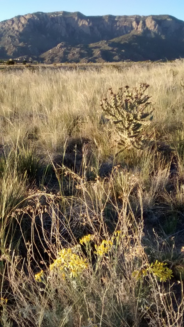Tall grasses with yellow flowers