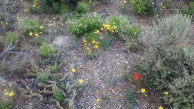 Taos desert garden