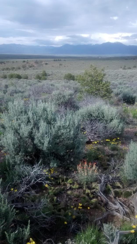 Taos mesa walk sage flowers mountains BIG