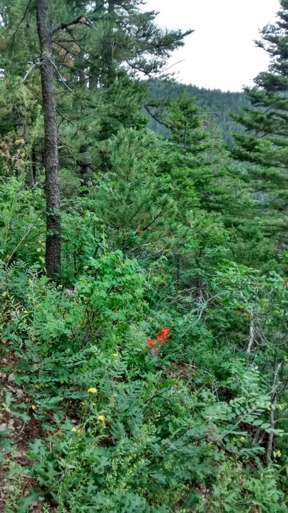 flowers on west rim trail