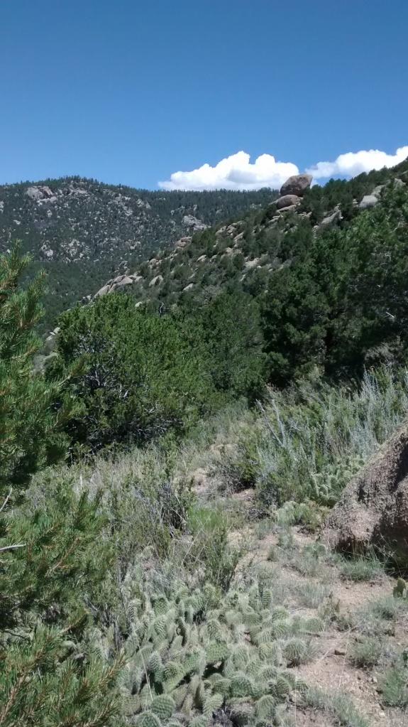 new mexico vegetation sky flow