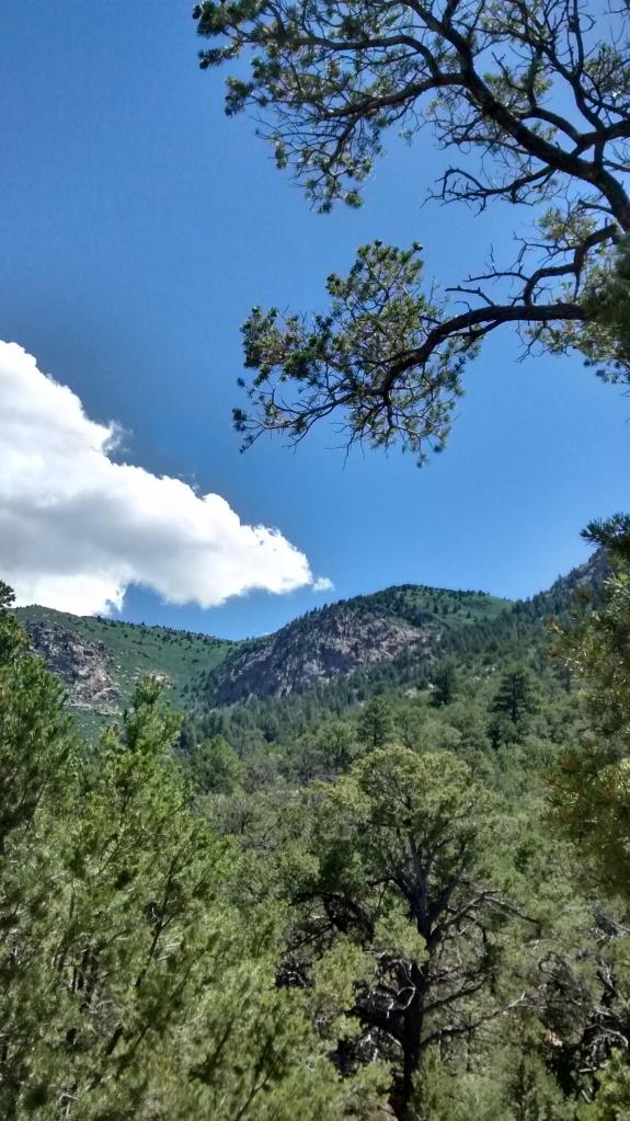 pine over sky