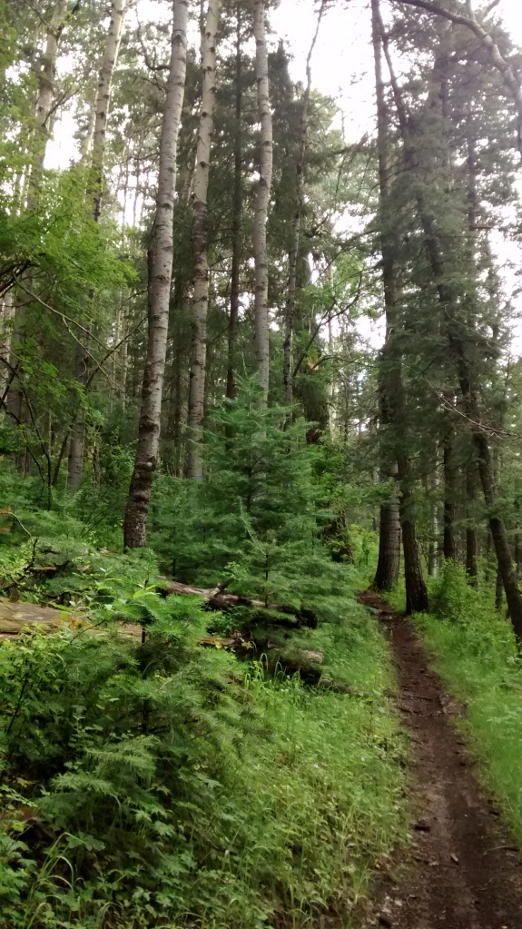 west rim trail to aspen forest
