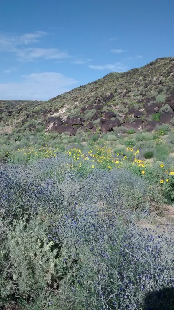basalt sunflower trails