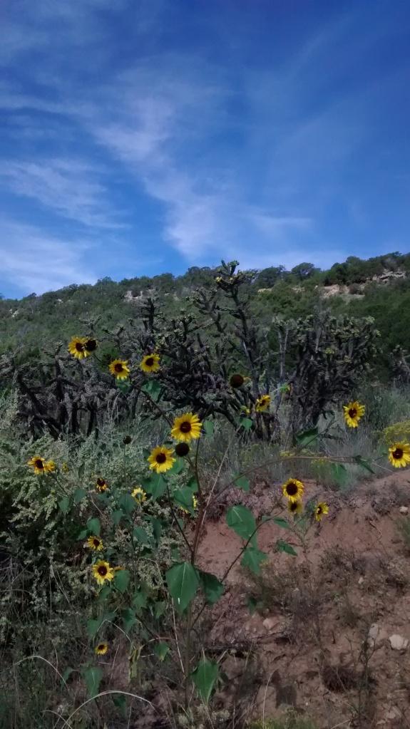 sunflower stance