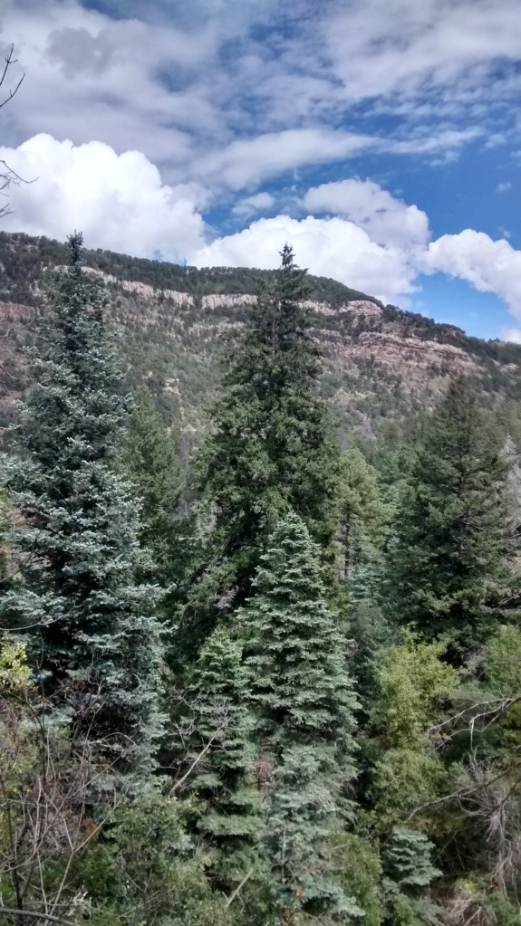 grandiose trees cliff sky blending