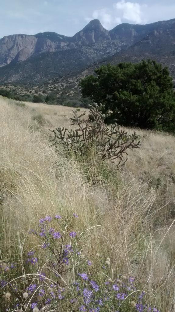 La Luz grass mountains flowers