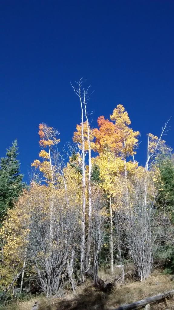 Aspen Vista blue