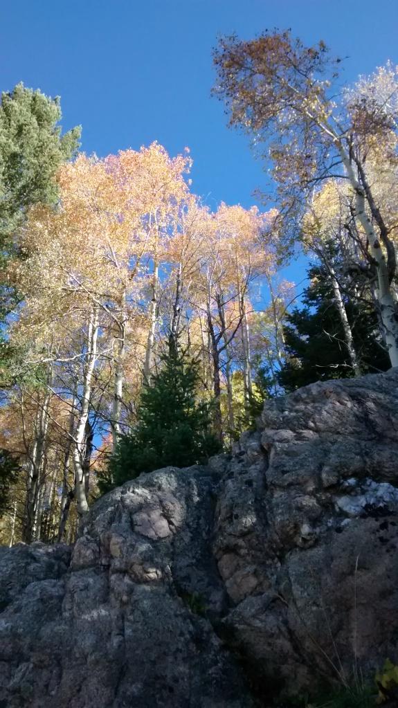 Aspen Vista humbled