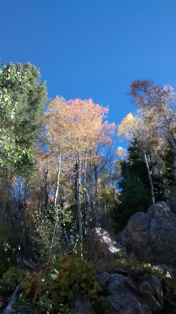 Aspen Vista roots