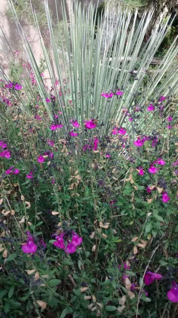 Biopark desert beauty