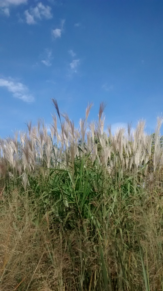 Biopark grass