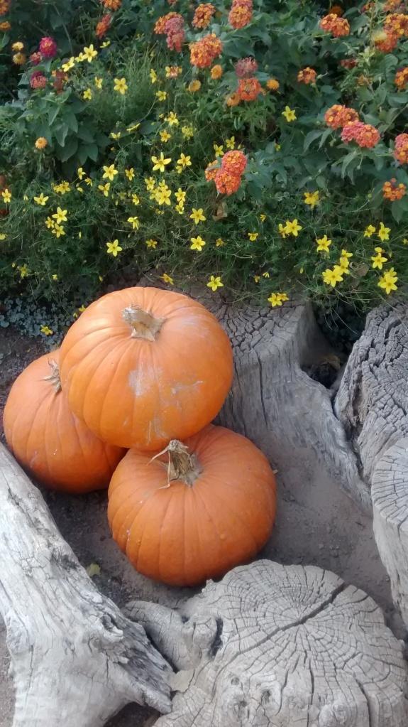 Biopark pumpkin arrangement