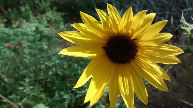 Biopark sunburst