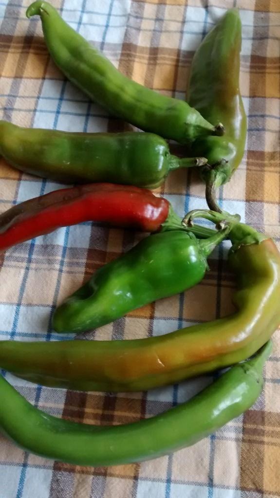 chili hearth