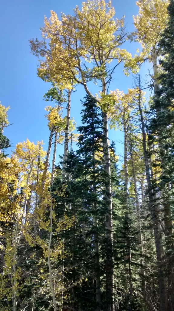 Crest Fall showing