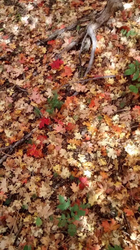 Manzano soil starter