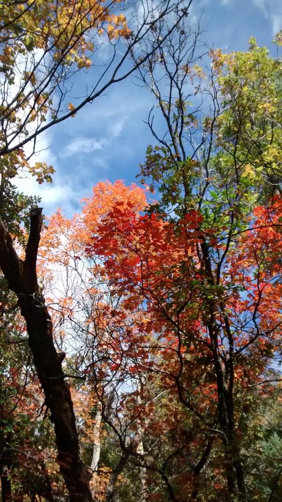 Manzano trees