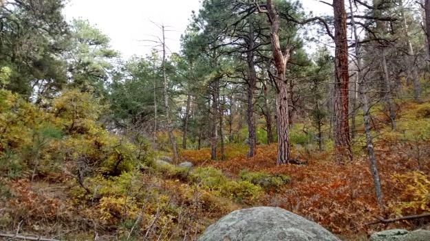 Pino Trail rust