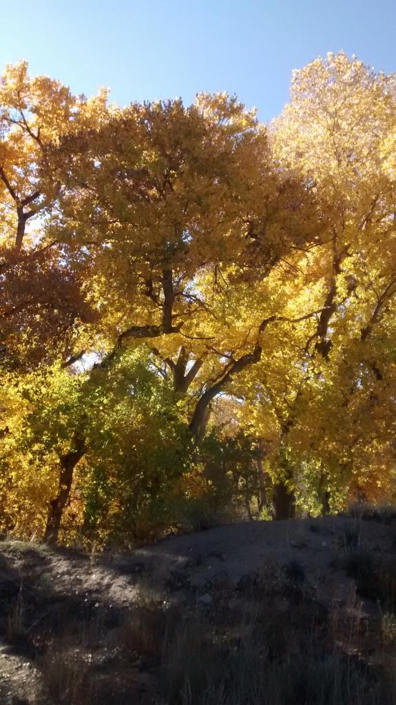 River Fall splendor