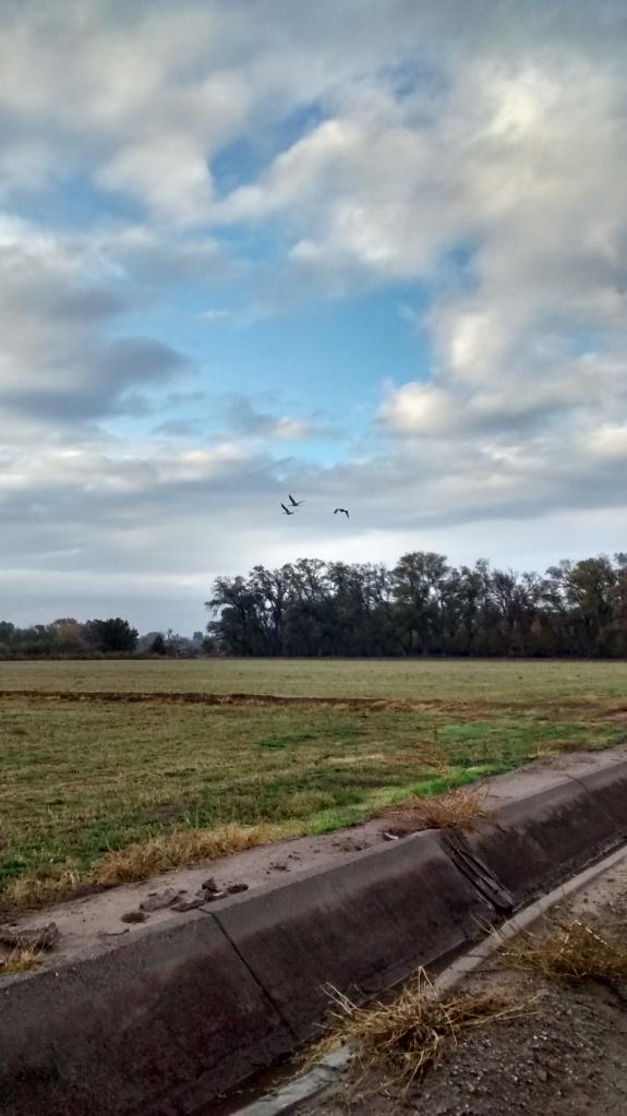 Valle de Oro cranes in flight