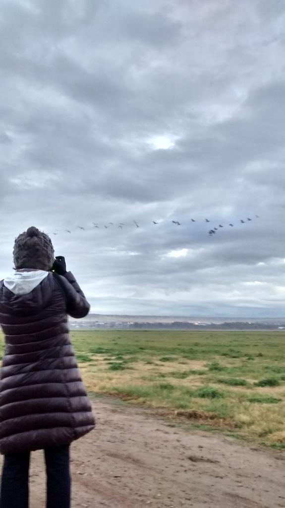 Valle de Oro cranes in sight