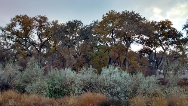 Valle de Oro the woods edge
