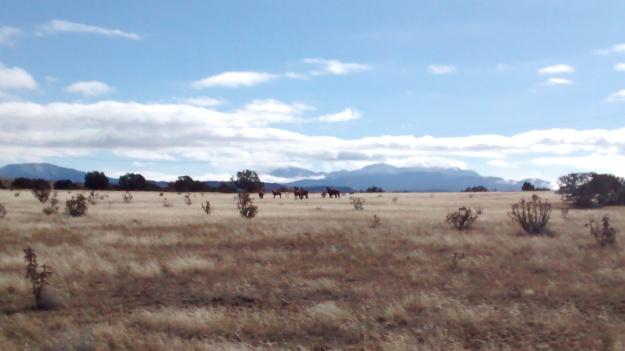 Hagens wild horses