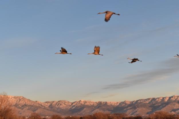 Mai's photo of cranes