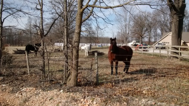 ARK all the pretty horses