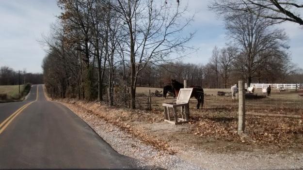 ARK horses