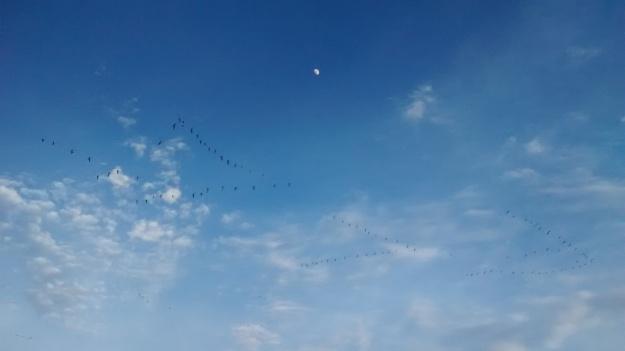 Bernardo flight by moon