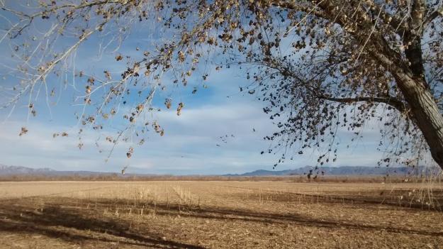 Cranes field drapery