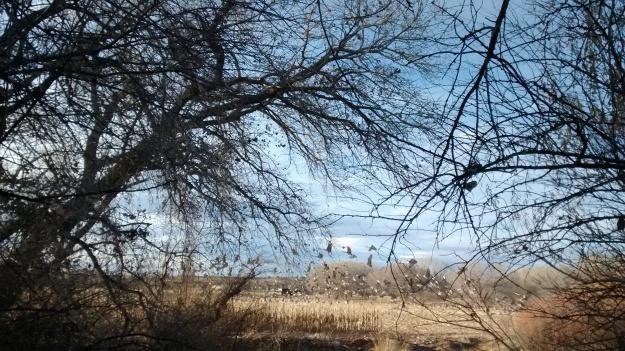 Cranes take off