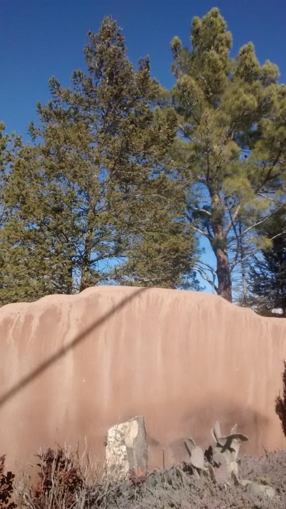 Corrales pines
