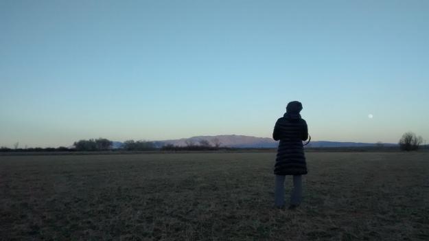 Crane Photographer