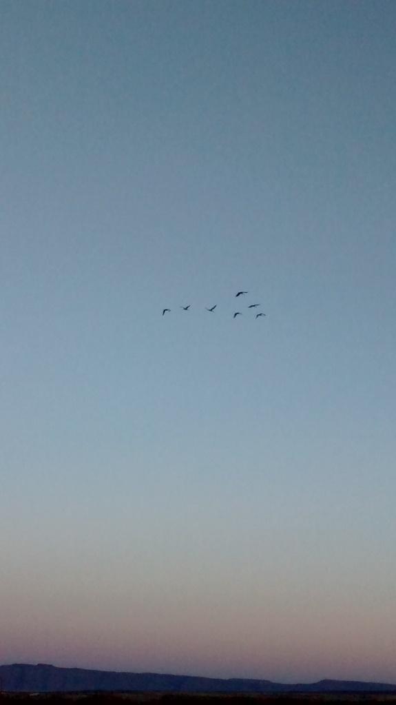 Cranes up high